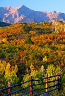 Dallas Creek Road Colorado Fall Foliage Ridgway Telluride Golden Aspen