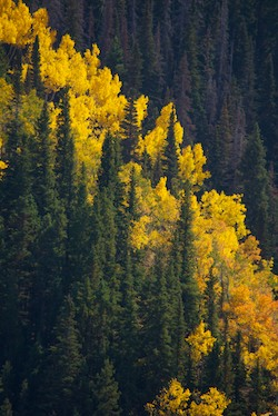 Ridgway Colorado Fall Foliage Dallas Creek Road Dallas Divide San Juan Mountains