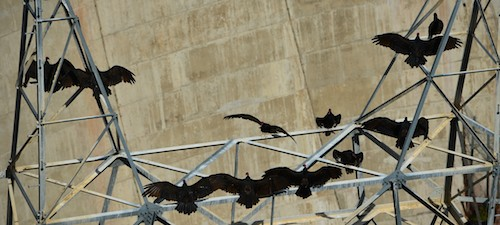 Turkey vultures dry their wings on the scaffolding outside the Flaming Gorge dam.