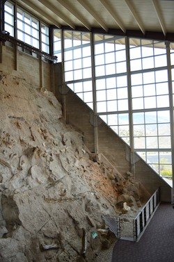 Wall of bones on display at Dinosaur National Monument
