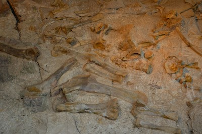 In our RV travels we found a Dinosaur graveyard at Dinosaur National Monument