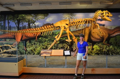 A reconstructed dinosaur skeleton at Dinosaur National Monument