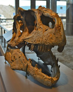 A skull on display at Dinosaur National Monument