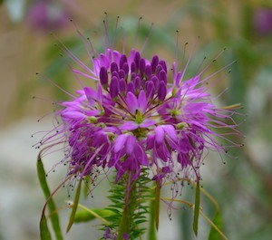 Wildflowers outside Dinosaur National Monument
