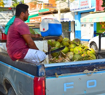coconuts in back of truck huatulco sail mexico blog
