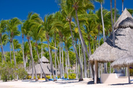 Palm trees and white sand beach