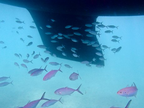 Mexico cruising ecosystem under the boat