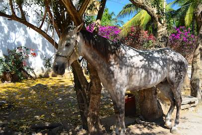 La Cruz Mexico horse in yard