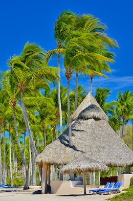 Palm trees and thatched palapa