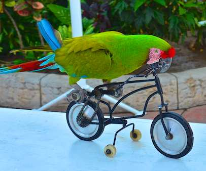 military macaw on bike