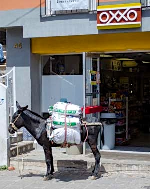 Donkey at Oxxo