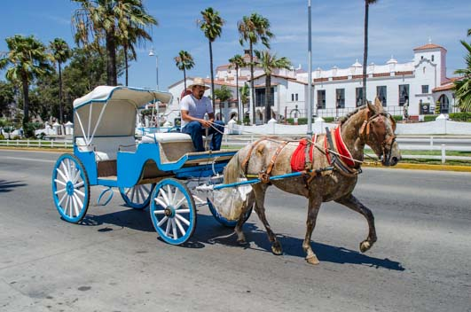 Horse and Buggy in Ensenada