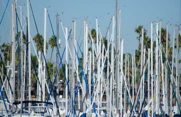 Shelter Island is a sea of masts
