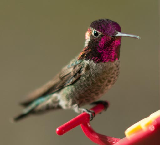 A hummingbird peers in our trailer window