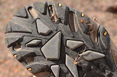 Cactus needles in hiking shoe