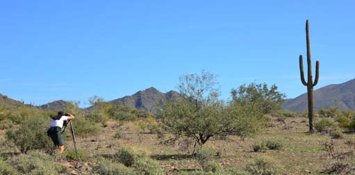 Mark lines up a Sonoran desert photo