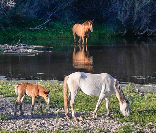 Horses by the river