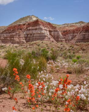 Wildflowers and red rocks