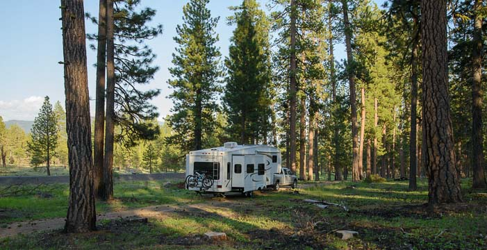 The buggy in the ponderosa pines of Oregon
