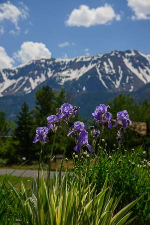 Lilacs and the Wallowa Mountains in Eastern Oregon