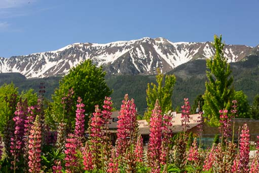 Garden flowers against snow-capped Wallowa Mountains