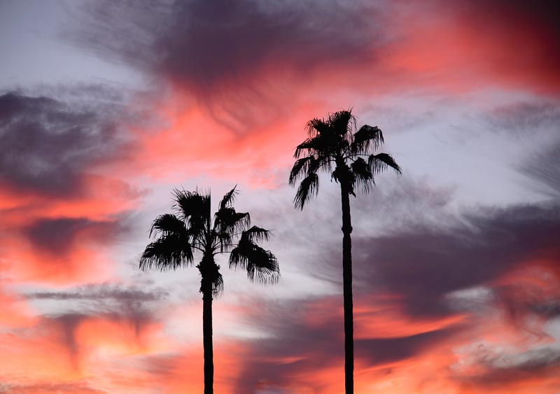 Sunset in Arizona with Palms
