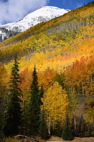 Fall colors with snow in Ouray Colorado