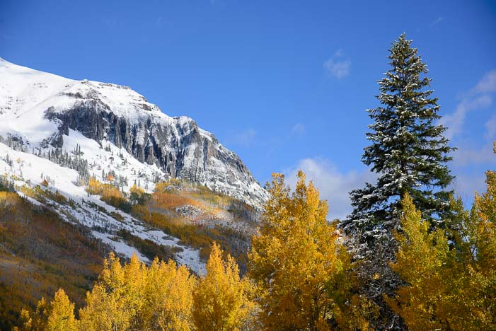 Golden aspen in the San Juan Mountains in Colorado