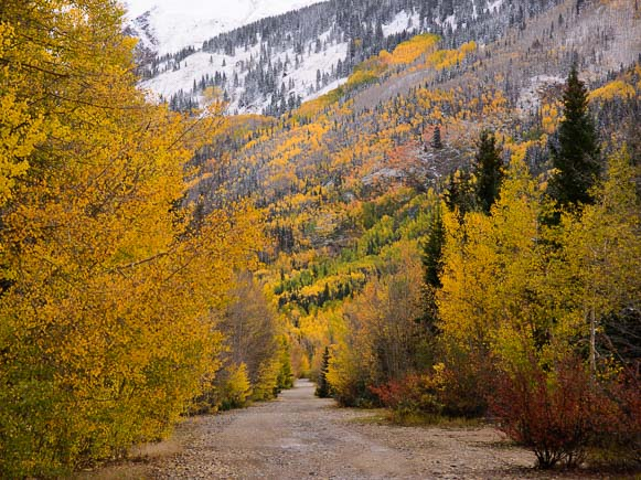 Golden path near Ridgway Colorado