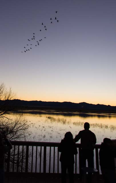 People watch the sandhill cranes fly in Arizona sunset