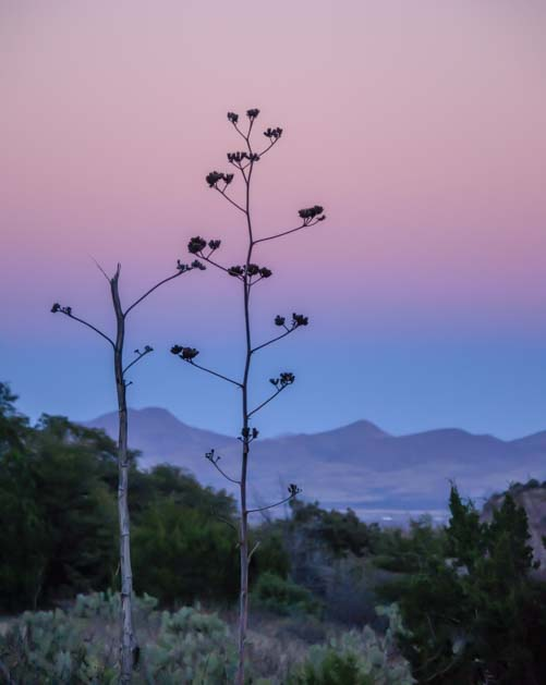 Pink and blue sky in the Chiricahuas in Arizona