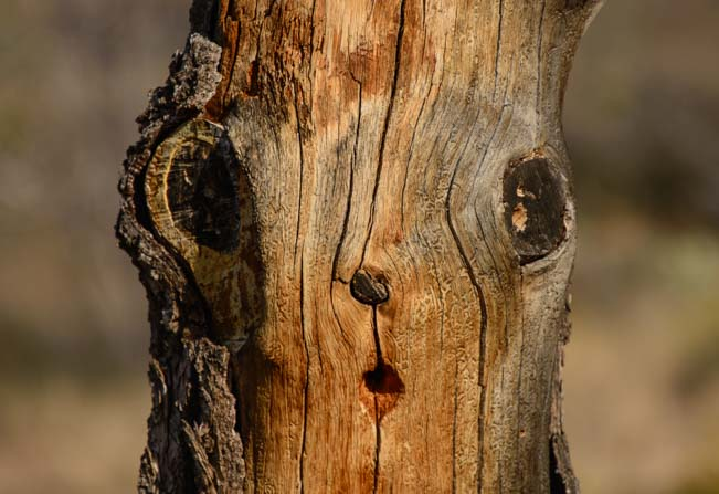 Surprised face in a tree