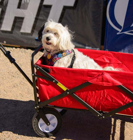 Dog in a wagon