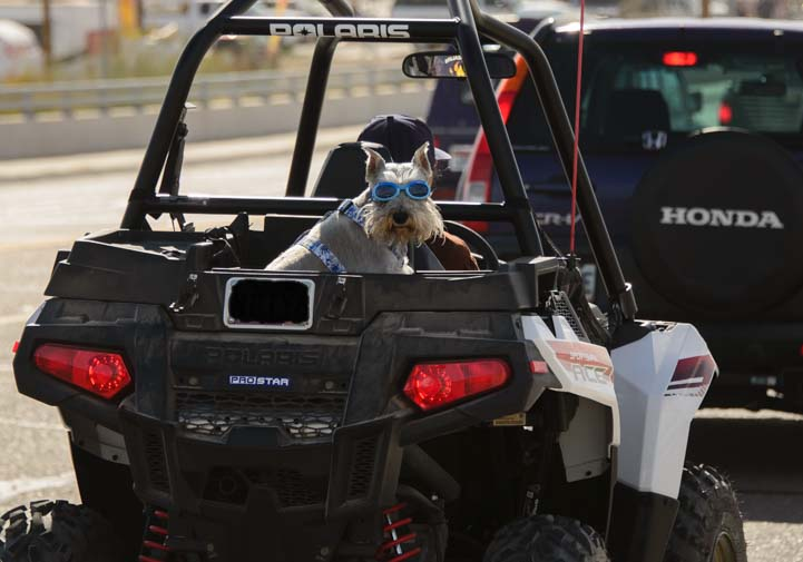 Dog in a four wheeler ATV