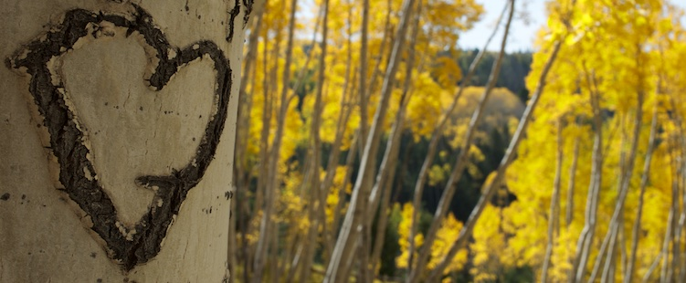 Valentine heart carved into an aspen tree