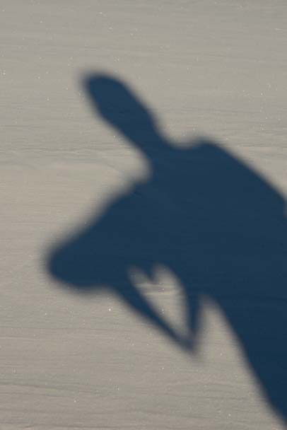 Shadow Puppet heart in the sand