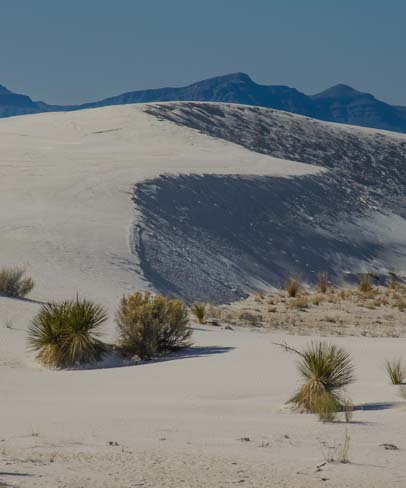 Curving dunes in the sand in New Mexico