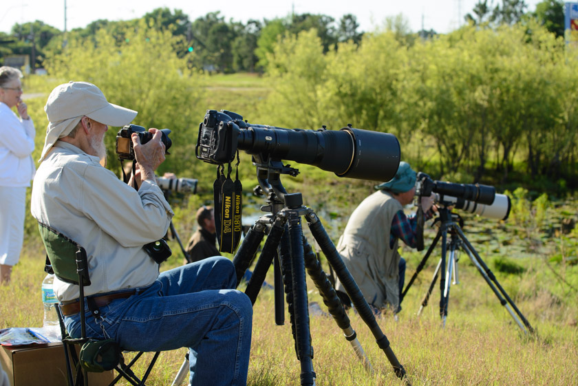 Photographers and birders watch the baby sandhill cranes