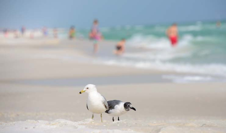 Seagulls on the beach in Florida
