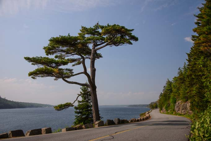 Scenic drive Acadia National Park Maine