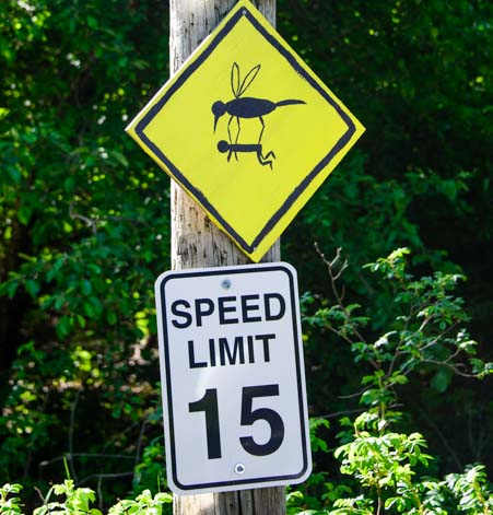Mosquitos and 15 mph speed limit on Islesford Maine