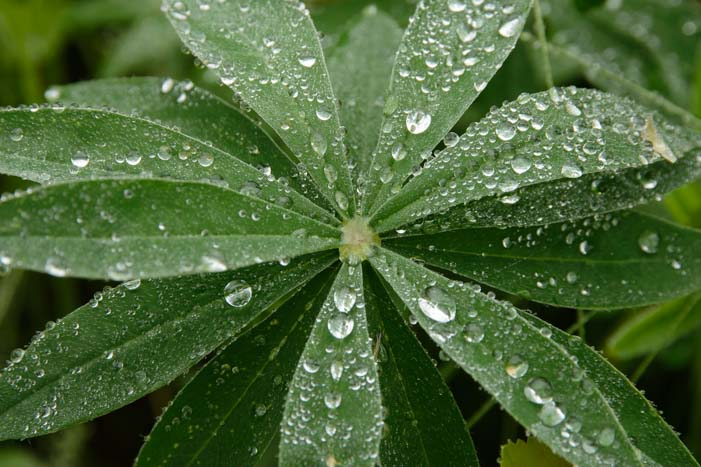 Diamond raindrops on leaves_