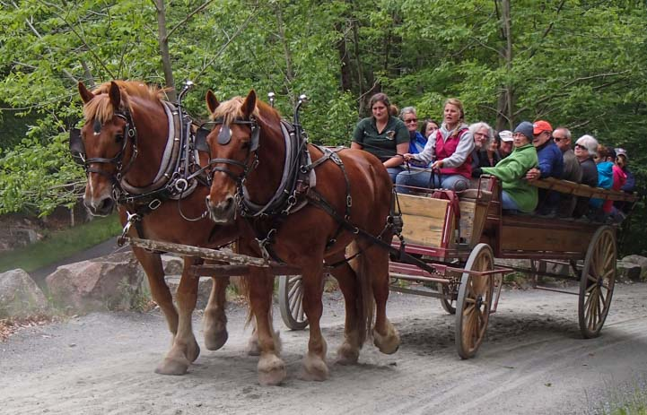 Horse drawn wagon on the Carriage Roads at Acadia National Park Maine