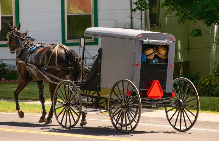 Amish horse and carriage Finger Lakes New York