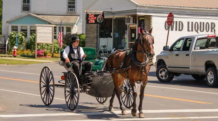 Amish open horse and carriage Ovid New York