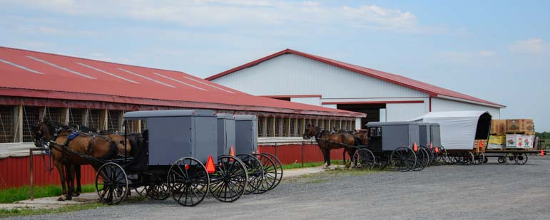 Amish horses and buggies tied up_