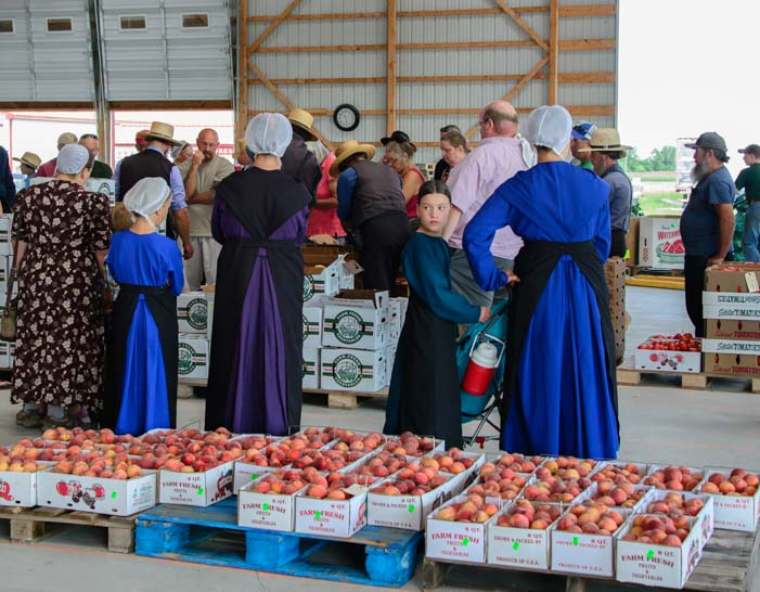 Amish farmers Finger Lakes produce auction