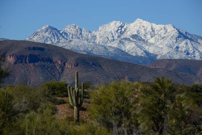 Saguaro cactus Four Peaks in Snow Arizona