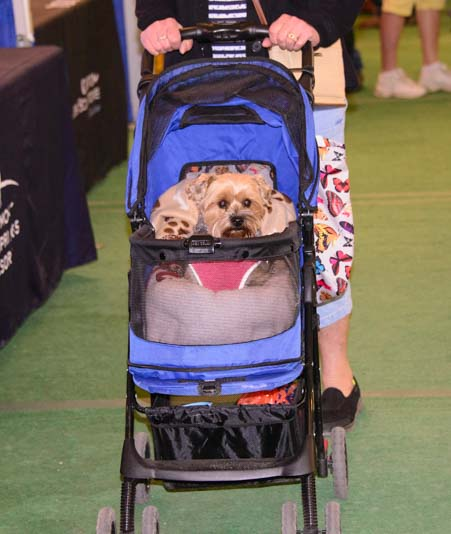 Dog in stroller Quartzsite Arizona RV Show