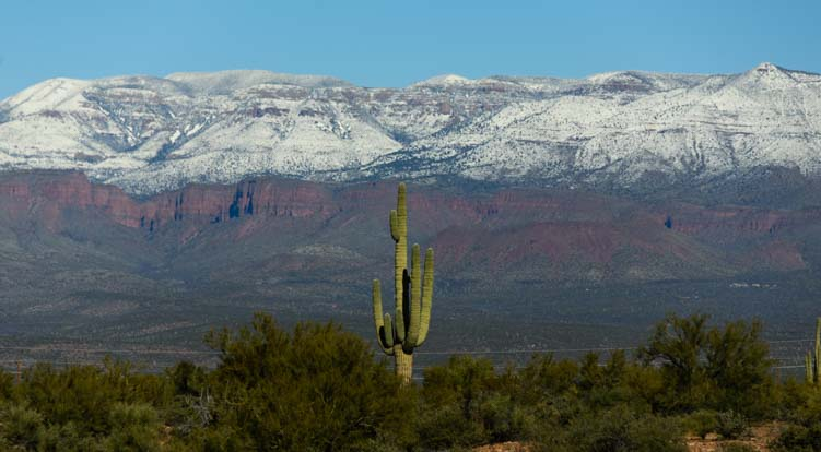 Saguaro cactus snow capped mountains Tonto National Forest Arizona